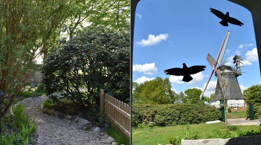 Blick aus der Ferienwohnung in den Garten und auf die Mühle